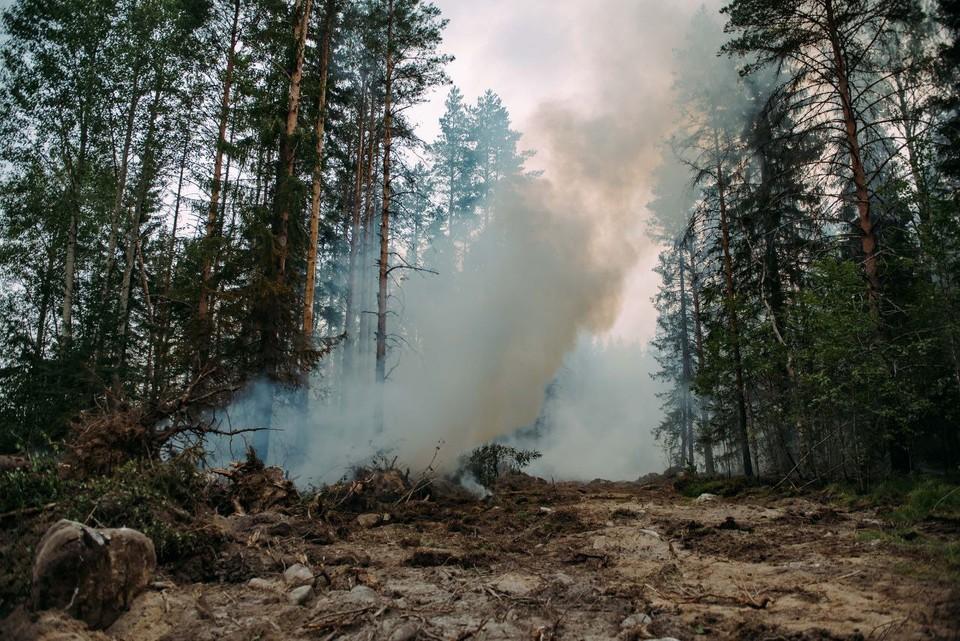 Лесной пожар в Карелии перекинулся на сторону Финляндии / Фото: Оперштаб Карелии
