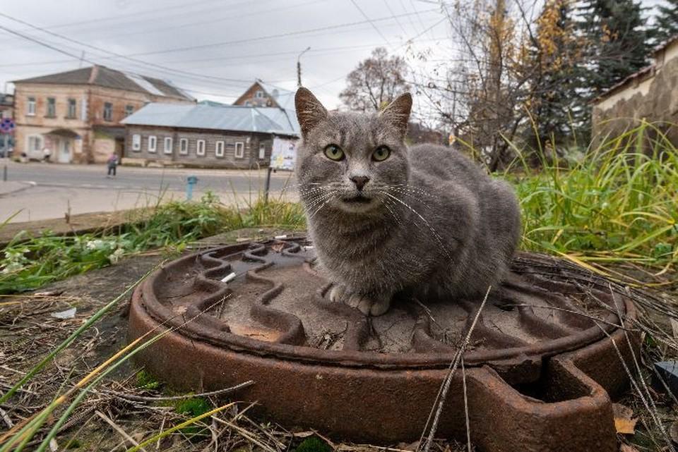 Рыбинец заплатил за украденные люки больше 50 тысяч рублей