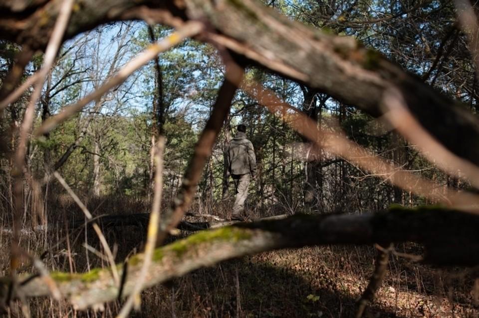 В Омской области мужчина в лесу расстрелял пятерых собак на глазах у хозяина.