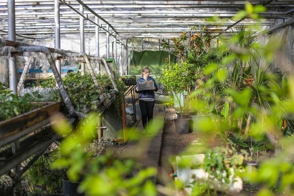 В крымской столице за озелененными территориями никто не ухаживает. Фото: пресс-служба администрации Симферополя